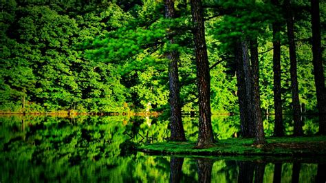 Green Forest by Green Forest Image Awesome Green Forest 1869