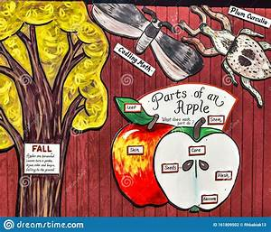Parts Of An Apple Diagram Stock Illustration  Illustration