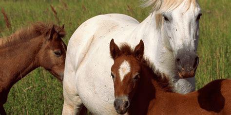 horses ruminants