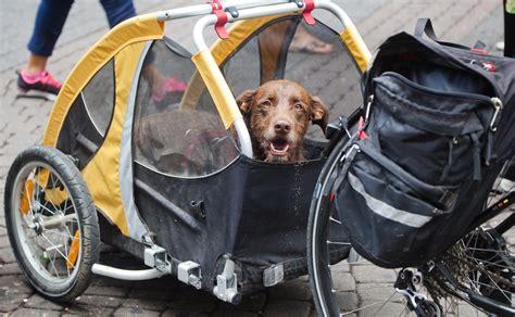 fahrradanhänger hund gefedert hundefahrradanh 228 nger im test 2018 unsere 3 testsieger