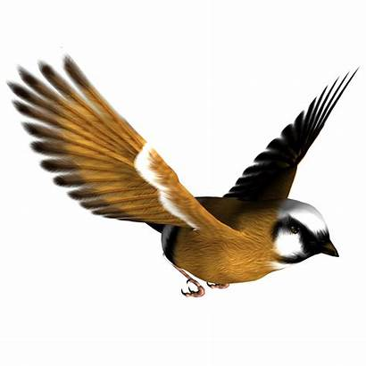 Bird Clipart Birds Resolution Clip Graphics Transparent
