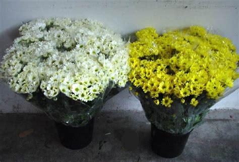 vasi per cimitero i vasi di fiori nel cimitero di leca quot non possono entrare