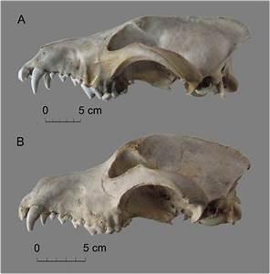 Wolf Bones Diagram