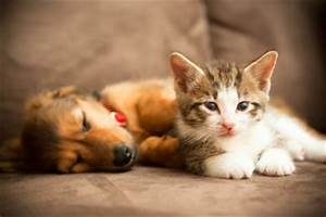 Katze Im Haus Halten : hunde und katzen zusammen halten so funktioniert 39 s ~ Lizthompson.info Haus und Dekorationen