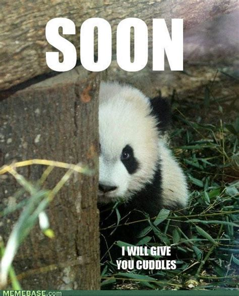Cutest Animal Memes - cute hello memes image memes at relatably com