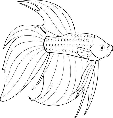 desenhos de peixe betta  imprimir  colorir animais