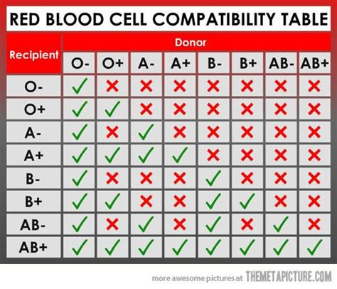 blood type chart facts and information on blood group types blood type chart blood groups