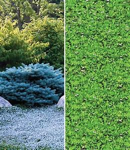 Bodendecker Statt Gras : winterharde bodembedekker collectie laag groeiende planten bij baldur nederland ~ Sanjose-hotels-ca.com Haus und Dekorationen