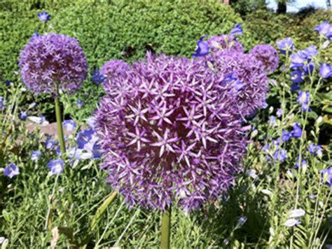 wann blumenzwiebeln pflanzen zwiebelblumen liste pflanzen f 252 r nassen boden