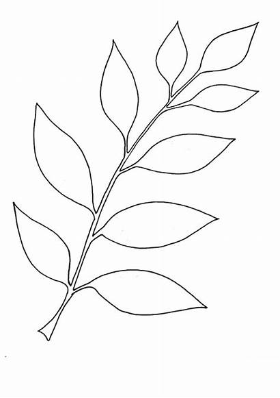 Coloring Leaf Simple Indiaparenting