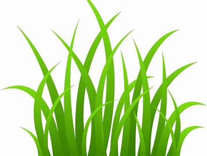 Grass Plains Clipart Cartoon Transparent Texture Clip