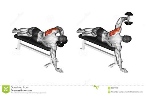 Shoulder Pain Incline Bench by Exercising One Arm Dumbbell Preacher Curl Royalty Free