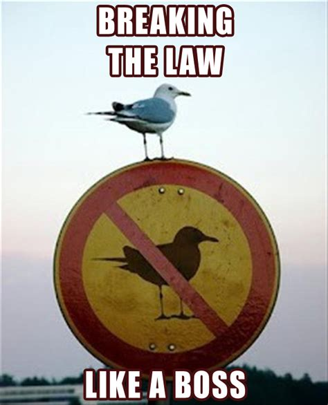 Stop Breaking The Law Meme - funny memes like a boss 4 dump a day