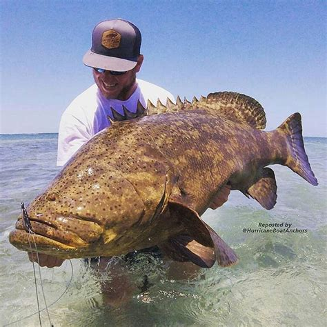 grouper reeder wes goliath hauled check anchors boat says