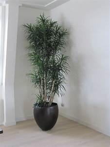 Pot  U0026 39 Wood Design U0026 39  In Combinatie Met Een Sterke Kamerplant