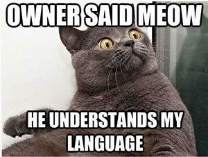 30 funny animal captions - part 3 (30 pics) | Amazing ...
