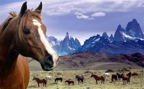 Horses In Mountains Wallpaper
