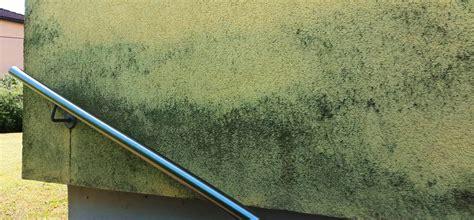 algen und pilze an fassaden entfernen algen und pilzbewuchs an fassaden