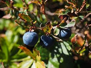 Plante Detoxifiante : 11 plante medicinale romanesti ce ti fortifica si intaresc ~ Melissatoandfro.com Idées de Décoration
