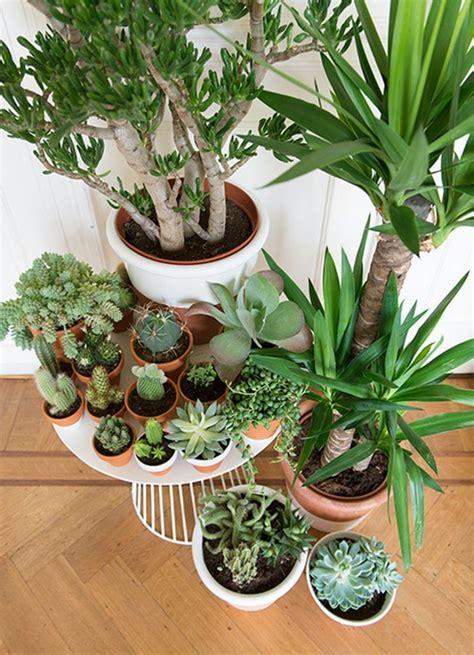 wonderful ways  display indoor plants  owner