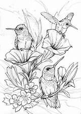 Coloring Hummingbird Pages Bird Hummingbirds Drawings Rocks sketch template