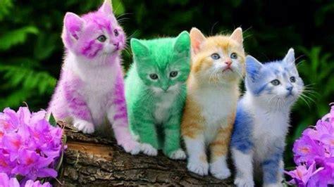 awww kitty cats   silly    weird cats