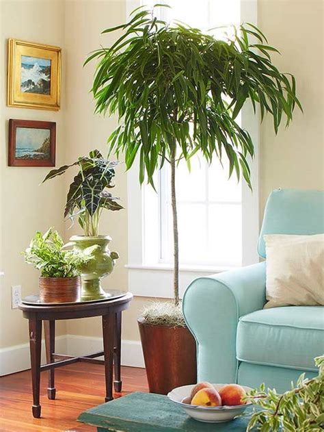 Low Light Indoor Trees by Indoor Trees That Spruce Up Any Space Indoor Plants We