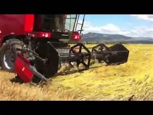Cosechadora Laverda REV 200 cosechando arroz - YouTube