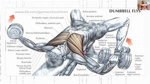 Bodybuilding Exercises   Best Chest Workouts For Mass