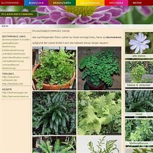 Pflanzen Bestimmen Nach Bildern : lila blumen bestimmen dekoration ~ Eleganceandgraceweddings.com Haus und Dekorationen