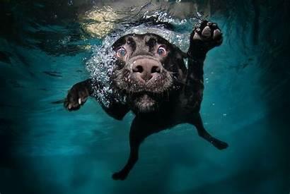 Dog Swimming Underwater Animals Desktop Wallpapers Backgrounds