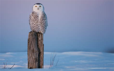 45 Winter Owl Desktop Wallpaper On Wallpapersafari