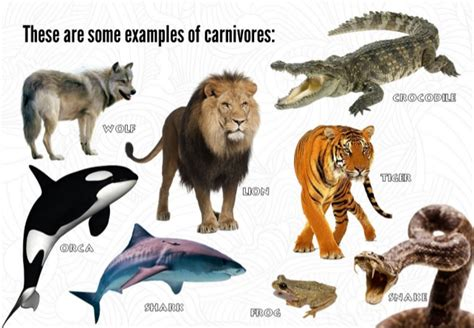 animals science carnivores examples some