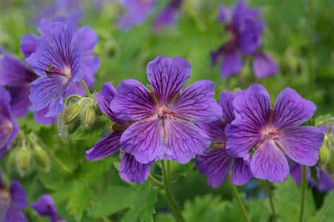 perennials that bloom all summer 8 perennial flowers for summer long blooms in shade garden pics and tips