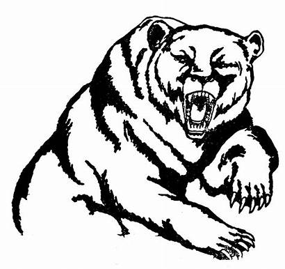 Bear Grizzly Clipart Mascot Drawing Head Grizzlies