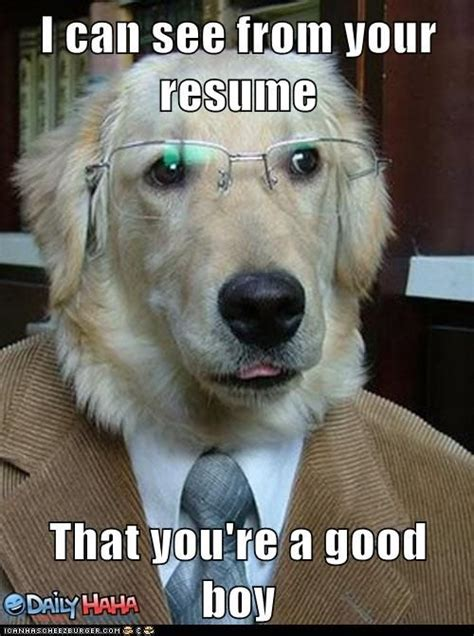 Memes About Dogs - customer service dog meme ncbi rofl dogs canis familiaris evaluate humans on the basis of