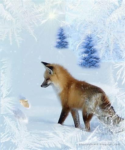 Animated Fox Gifs Wildlife Animal Foxes Winter
