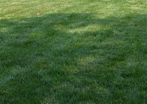 what is hydroseeding process hydroseeding and other landscaping services in pittsburgh