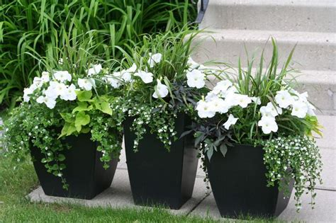 These Are My Flower Pots I Put Together In Early Spring