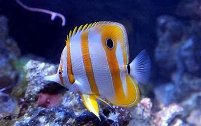 Marine Fish Aquarium Theme Saltwater 5d Apk