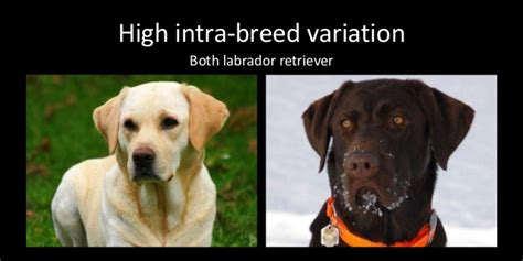 dog breed classification  part localization