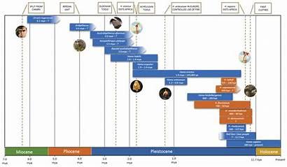 Hominin Timeline Break Science Update Figure