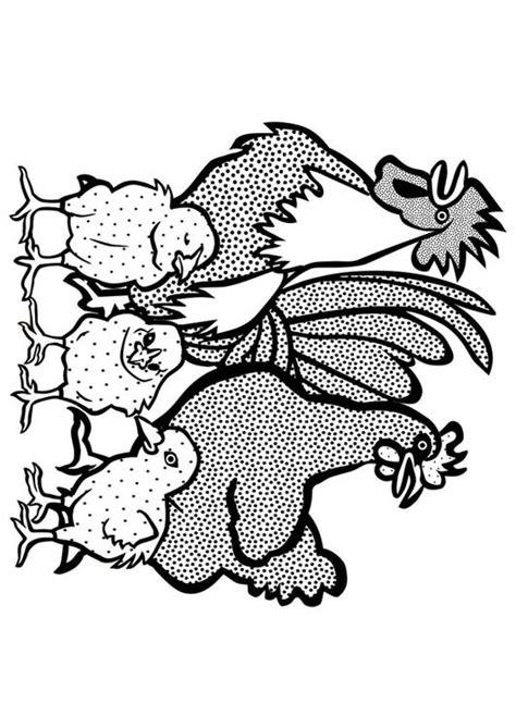 disegno da colorare gallo gallina  pulcini cat