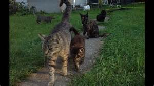 colony cats animal lover needs help w feral cat colony by celestial