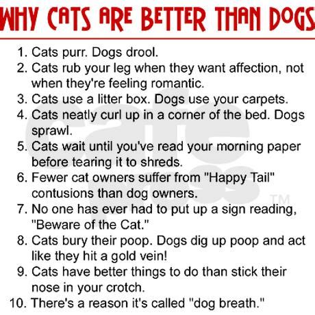 dogs cats better why than dog then cat hate story babies palmtalk funny wiley dakota via side