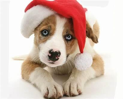 Puppy Background Santa Dog Hat Christmas Animal