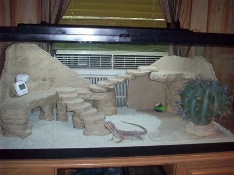 Baby Bearded Dragon Cage Setup