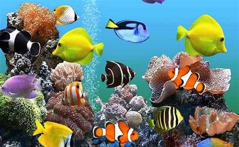 top 5 des meilleurs aquariums