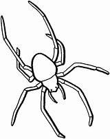 Insekt Colorare Disegni Beinen Langen Disegno Ragni Ragno Tiere Bambini Ausmalbilder Coloring Malvorlage Trapdoor Malvorlagen Bild Spider Gratis Template Ausmalbild sketch template