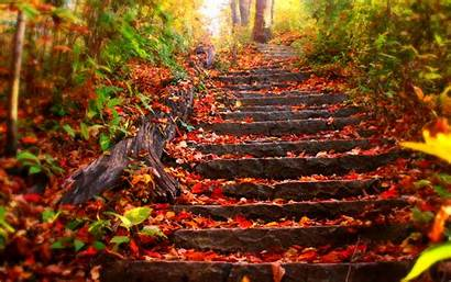 Leaves Autumn Wallpapers Desktop Computer Fall Backgrounds